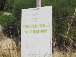 Riserva del Pino d'Aleppo